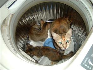 Cats-washing-machine